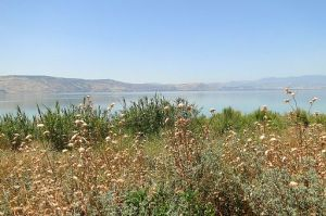 View of Wildflowers, Fields, and Lake Kinnaret (Sea of Galilee) By Adam Jones from Kelowna, BC, Canada [CC BY-SA 2.0], via Wikimedia Commons