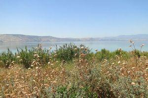 View of Wildflowers, Fields, and Lake Kinnaret (Sea of Galilee) By Adam Jones from Kelowna, BC, Canada [CC BY-SA 2.0], via Wikimedia Commons
